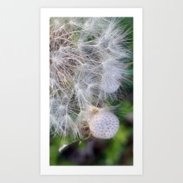 Time For Me To Fly 1 Art Print