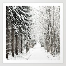 canopy of snowy branches Art Print