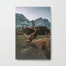 Deer in Yosemite Valley Metal Print