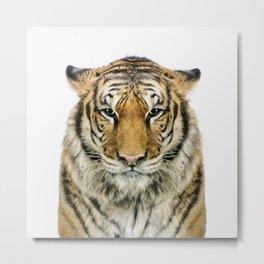 African Tiger Metal Print
