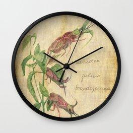 Planimarium - astacoidea justicia brandegeeana Wall Clock