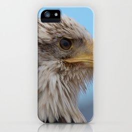 White Headed Eagle Portrait. iPhone Case