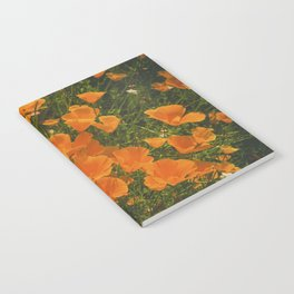 California Poppies 002 Notebook