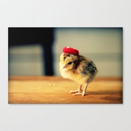 Chick Wearing A Red Beret Hat Canvas Print