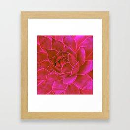 Suculenta Roja Framed Art Print