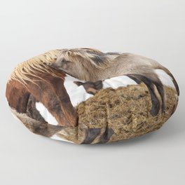 Iceland horses Floor Pillow