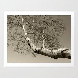 Birch tree #01 Art Print