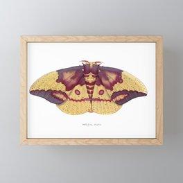 Imperial Moth (Eacles imperialis) Framed Mini Art Print