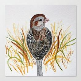 field sparrow watercolor Canvas Print