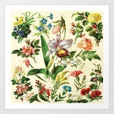 Botanical Art Print