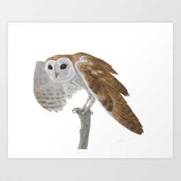 Common Barn Owl Art Print