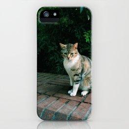 kedi.5 iPhone Case