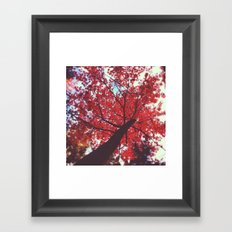 Autumn Red 2 Framed Art Print