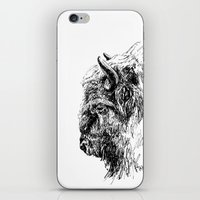 buffalo iPhone & iPod Skins featuring Buffalo by Ingrid Restemayer