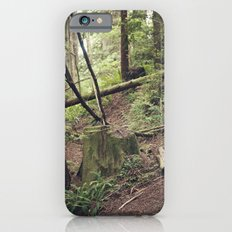 A walk in the Redwoods iPhone 6s Slim Case