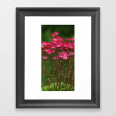 Saxifrage Framed Art Print
