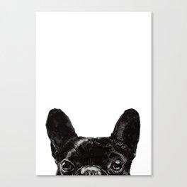 Peeking French Bulldog Canvas Print