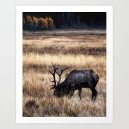 Meadows Of Horseshoe Park Art Print
