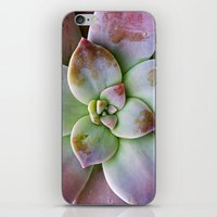 succulent iPhone & iPod Skins featuring Succulent by Lindsay Faye