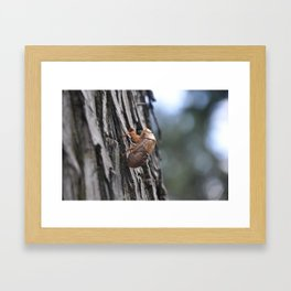 empty shell Framed Art Print