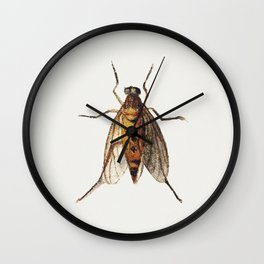Cicada from Sheet of Studies of Nine Insects (1660-1665) by Jan van Kessel Wall Clock