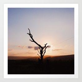 branch sunset Art Print