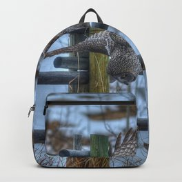 Dive, Dive, Dive! - Great Grey Owl Hunting Backpack
