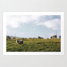 Lonely sheep Art Print