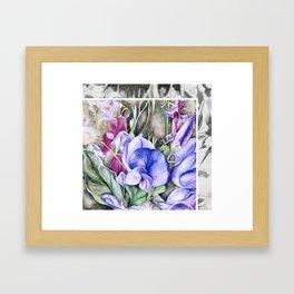Lathyrus 6 Framed Art Print
