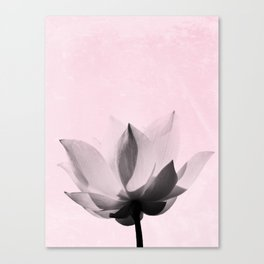 Lotus Flower | Pink Background Canvas Print