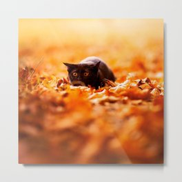 Autumn cat Metal Print