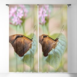 Pretty brown butterfly Blackout Curtain