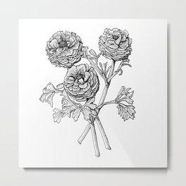 Ranunculus Hybrid Metal Print