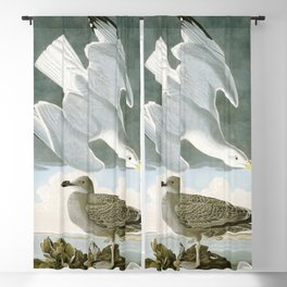 Seagulls Illustration - Birds in America Blackout Curtain
