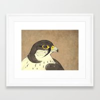 falcon Framed Art Prints featuring Falcon by Lynette Sherrard Illustration and Design