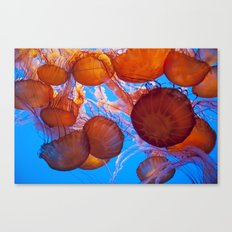Jelly Fish Canvas Print
