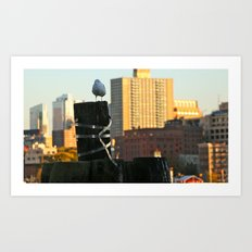 Brooklyn Gull Art Print
