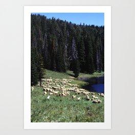 Valley Sheep Art Print