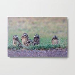 Baby Burrowing Owls Metal Print
