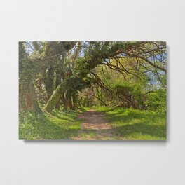 Wye Island Ferry Point Trail Metal Print