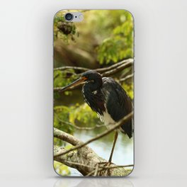 Tricolored At Rest iPhone Skin