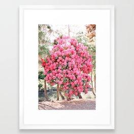 Hydrangea Bloom Framed Art Print