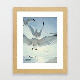 Seagulls {Five} Framed Art Print