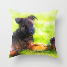 Hollandse herdershond puppy 8 weeks old Throw Pillow