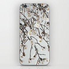 Emerging Spring iPhone & iPod Skin