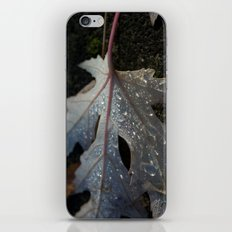 maple leaf iPhone & iPod Skin
