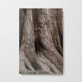 Tree Trunk Root Texture Metal Print