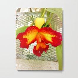The Sunny Ochid Metal Print