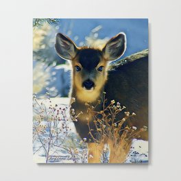 Blue Baby Deer in Winter Light by CheyAnne Sexton Metal Print
