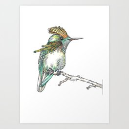 The Tufted Coquette Art Print